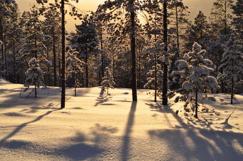 Vinterskog---Trond-Paaske
